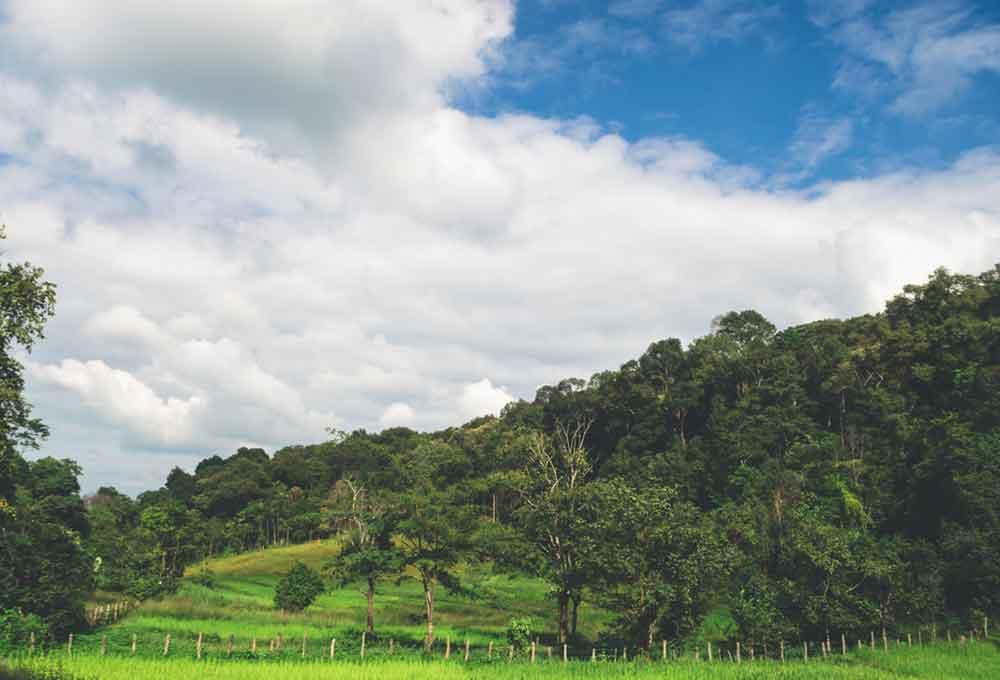 เที่ยว บ้านป่าแป๋ ลําพูน แวะชมบรรยากาศดีๆ วิวสวยๆ